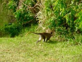 monkey sighting!