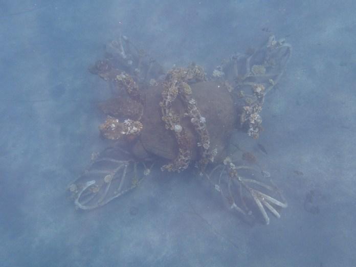Sea turtle Biorock.
