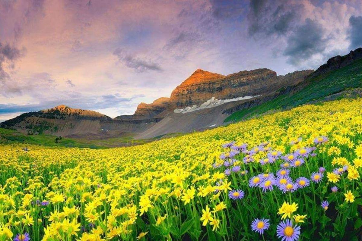 Valley of Flowers National Park Uttarakhand