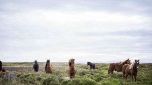 Iceland itinerary honeymoon