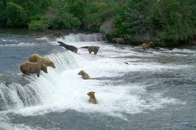 brown-bears-2119560_640