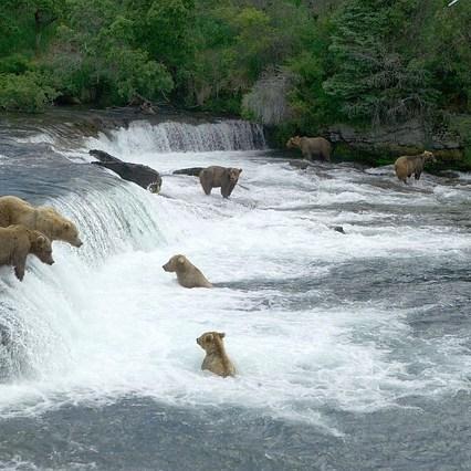 how-to-visit-alaska-brown-bears