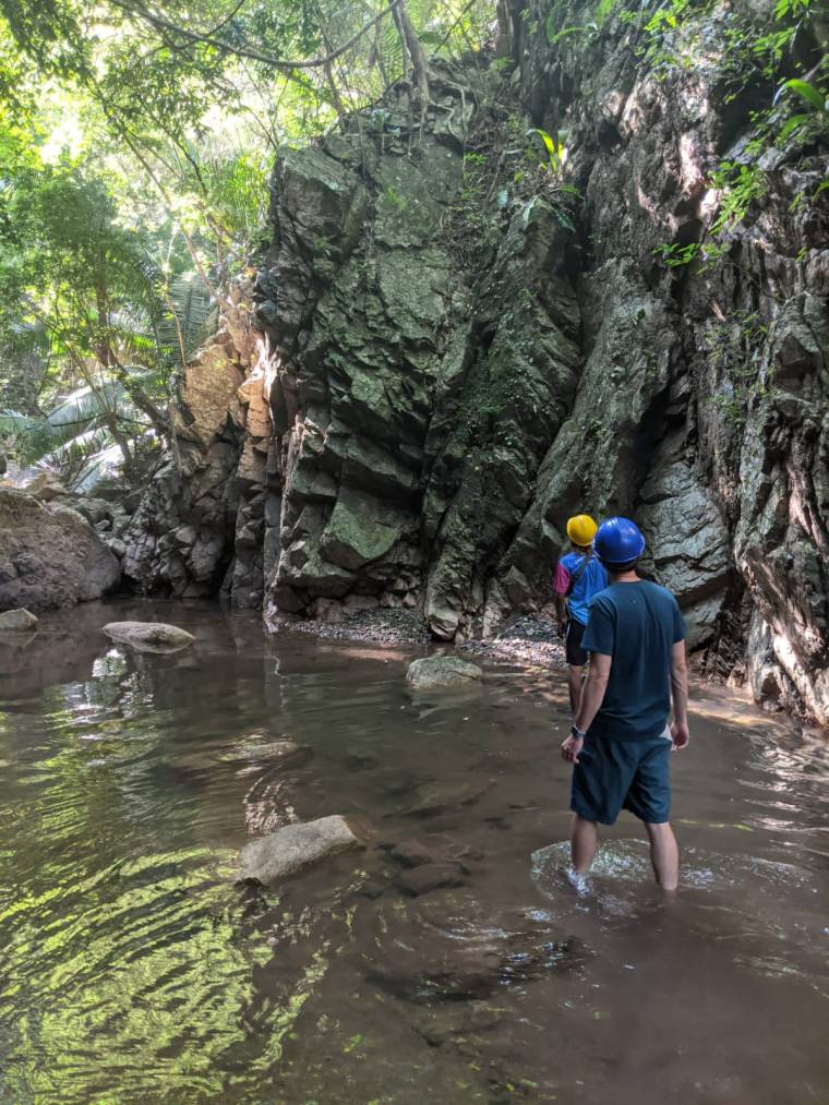 Puerto Vallarta jungle