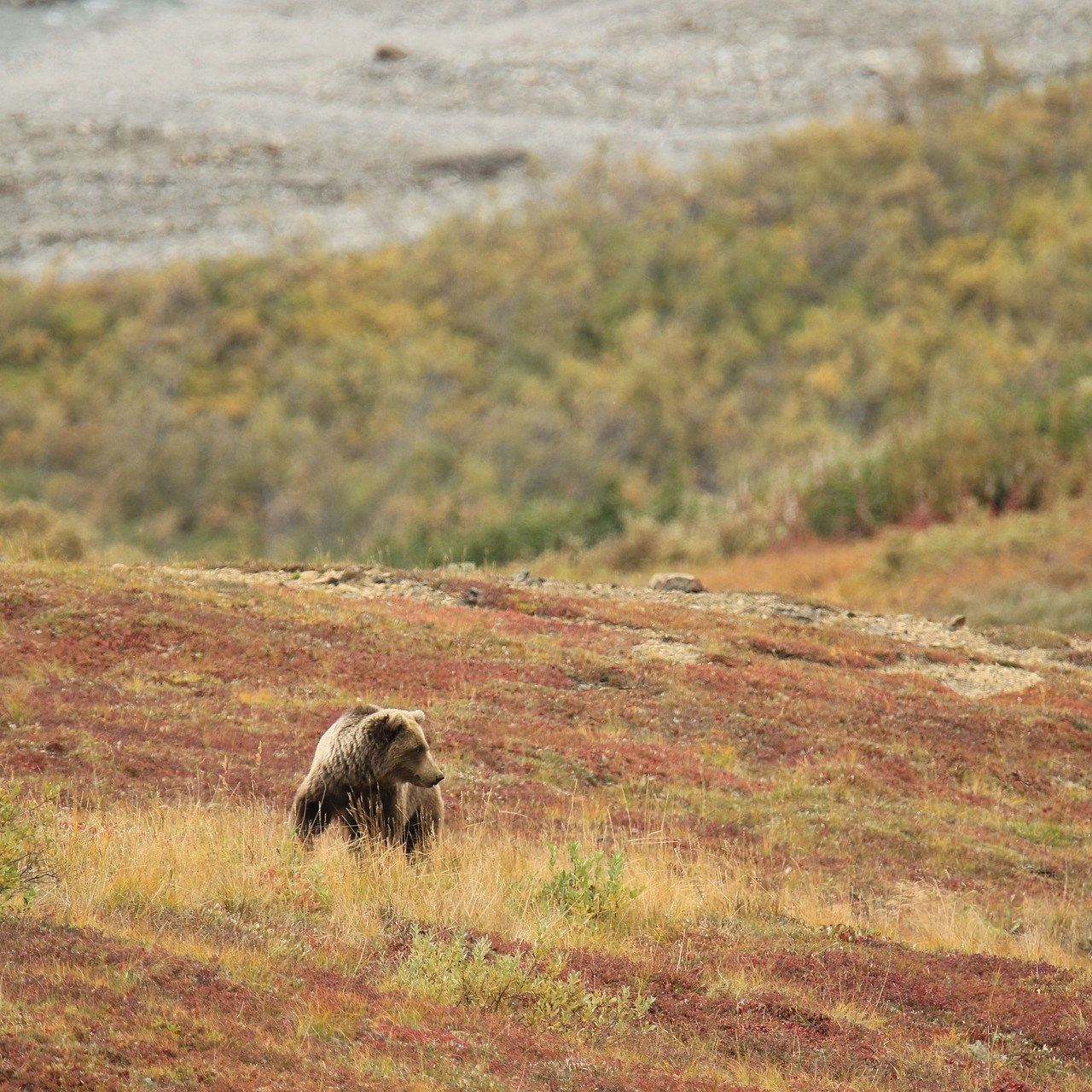 how-to-visit-alaska-bear-4486285_1920