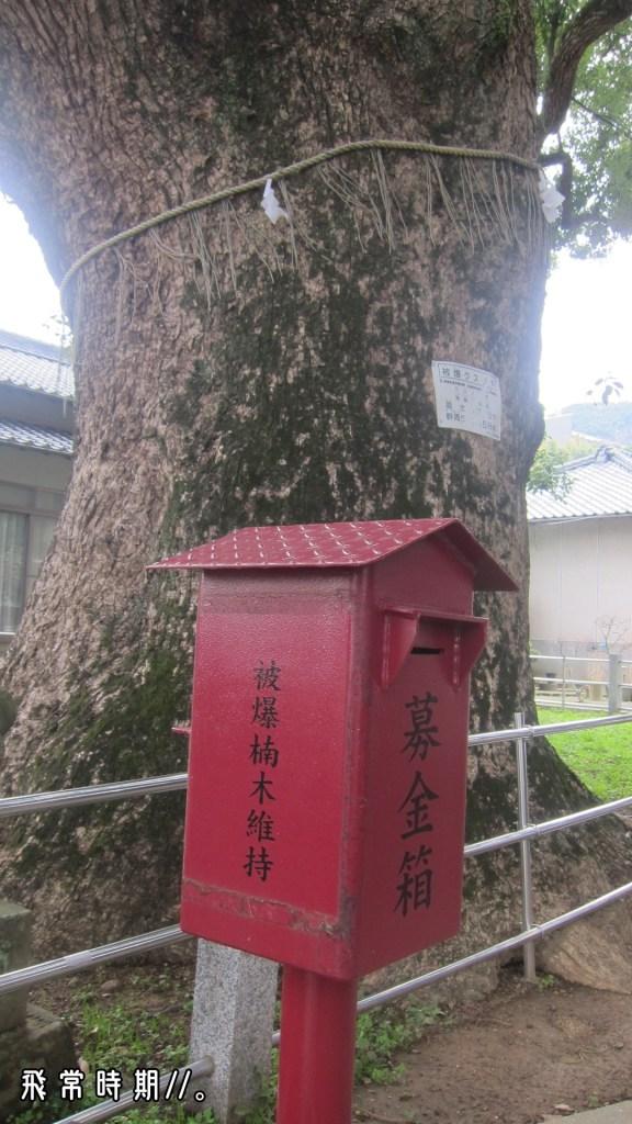 樹旁設有募捐箱,以保育大楠樹。