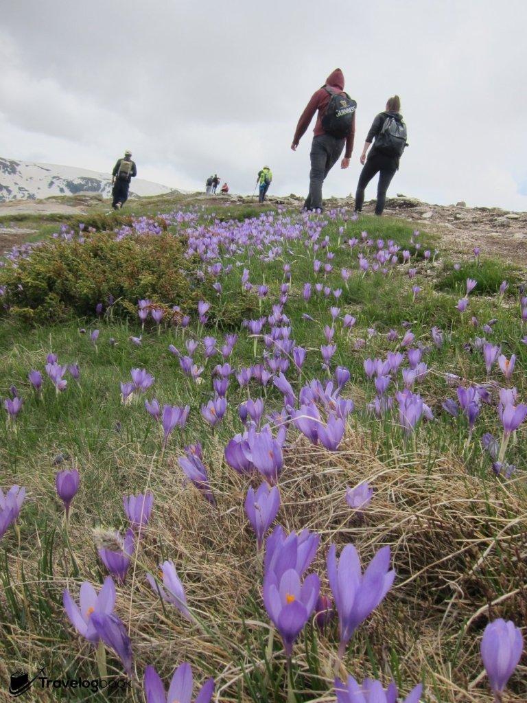 漫山遍地都是小花。