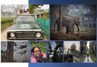 A Visit to Gorumara National Park, Eastern India