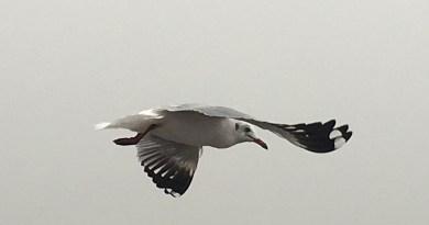 6 Top Bird-Watching Destinations in India