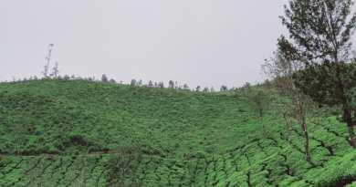 Popular Tea Growing Regions in Kerala, India