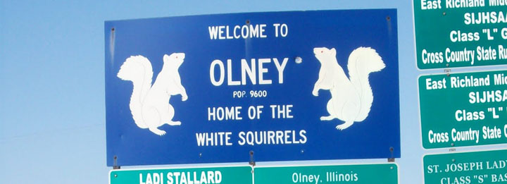Olney Albino Squirrels