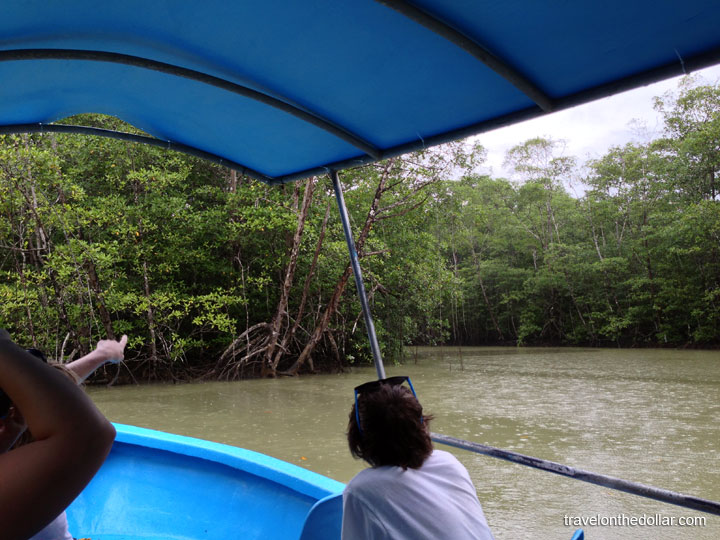 Mangrove tour at Manuel Antonio Park