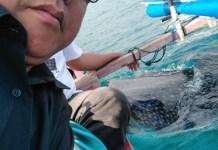 Wisata Hiu di Gorontalo