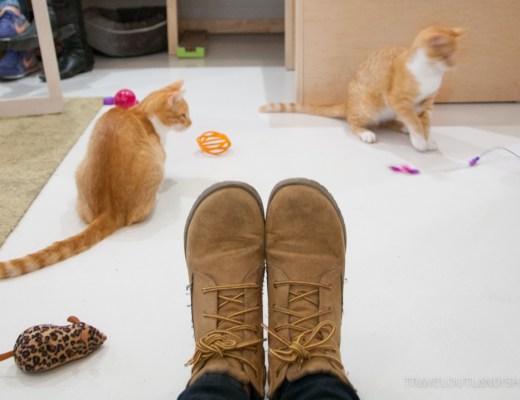 Kit Tea Cat Cafe SF
