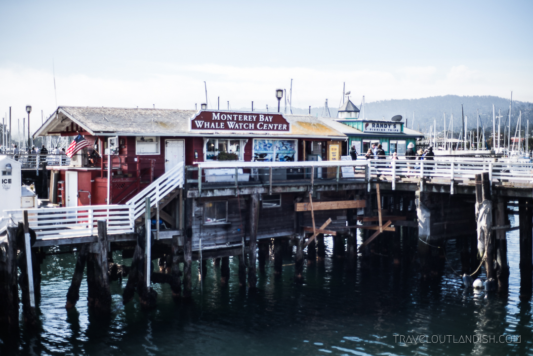 Whale Watching in California: Monterey Bay Whale Watch Dock