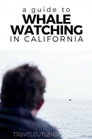 There she blows! The best places to go whale watching in California and photos from whale watching in Monterey Bay.