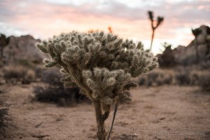 An Outlandish Guide to Joshua Tree National Park
