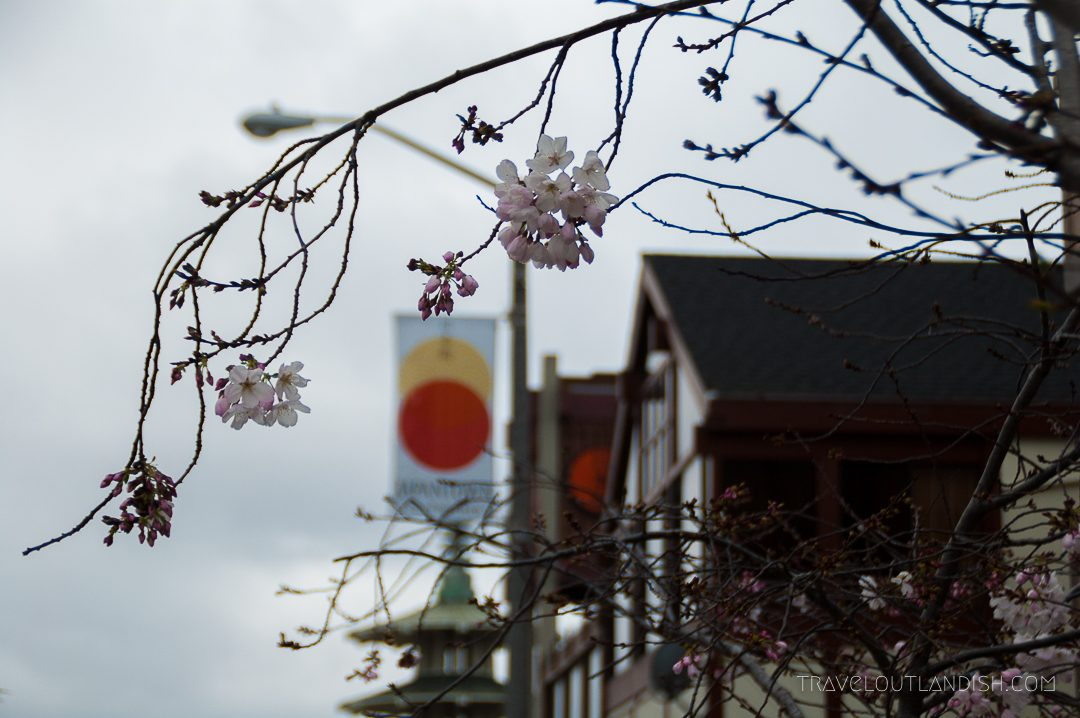 Unique Things to do in San Francisco: Explore Japantown