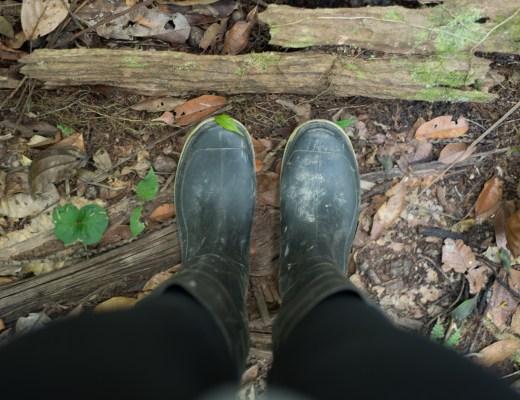 Ecuador Amazon - Medicinal Plant Walk