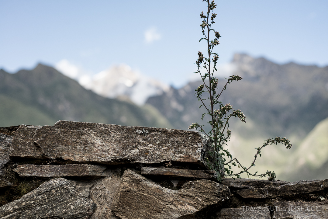 Plants growing out between stones at Choquequirao