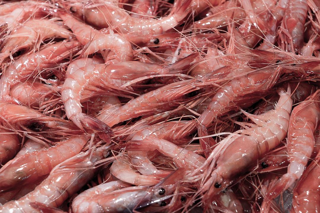 Girona Palamos Market - Shrimp