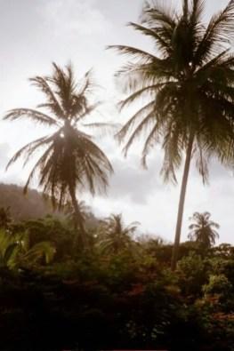 Palms St. David's Bay