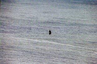 Lone sailboat; Antigua