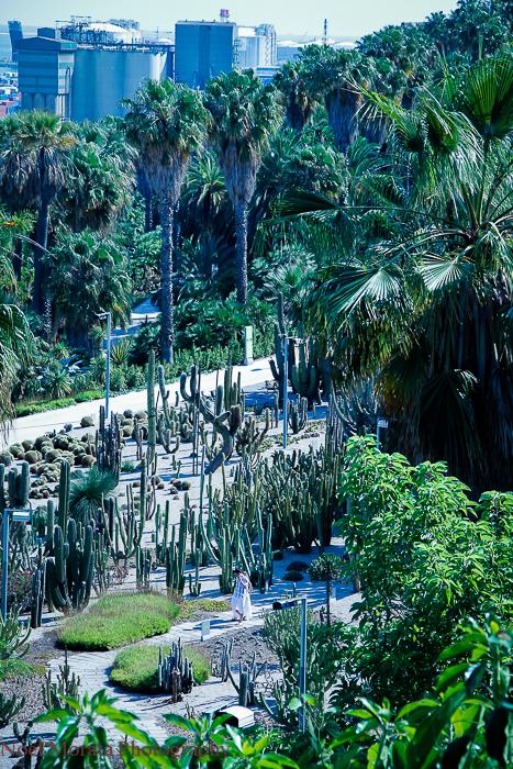 Montjuic botanic garden views
