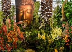 Hilo Orchid Show 2013 (35)