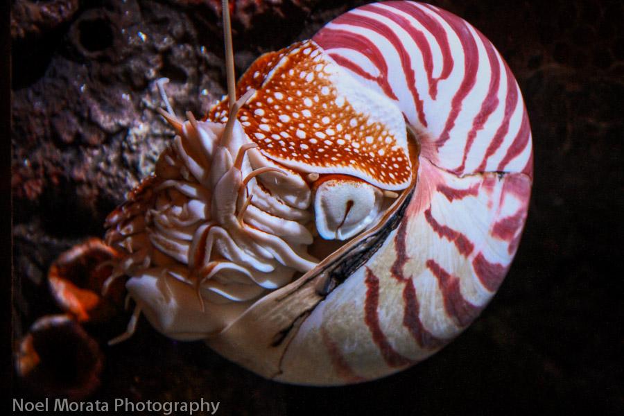 Nautilus on display