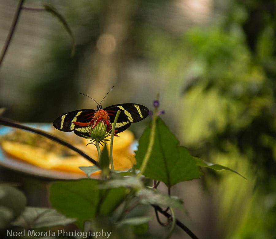Butterflies in the rainforest exhibit