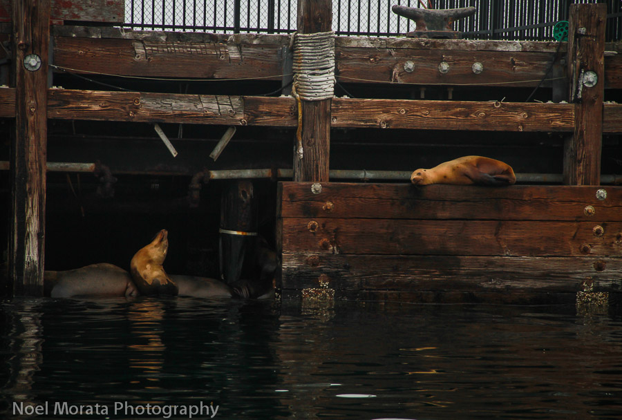 Harbor seals find sheltered spots at the habor