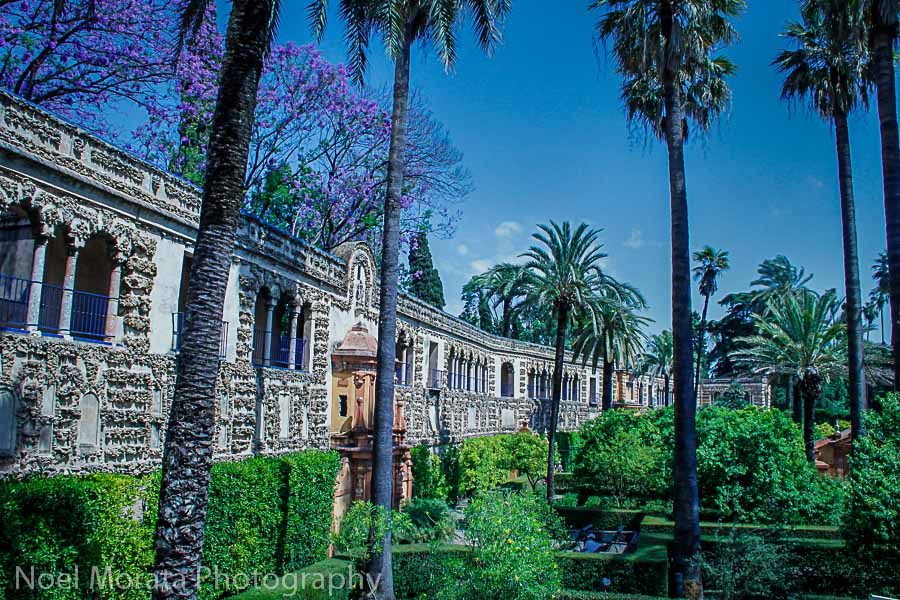 Lush gardens of the Alcazar in Seville