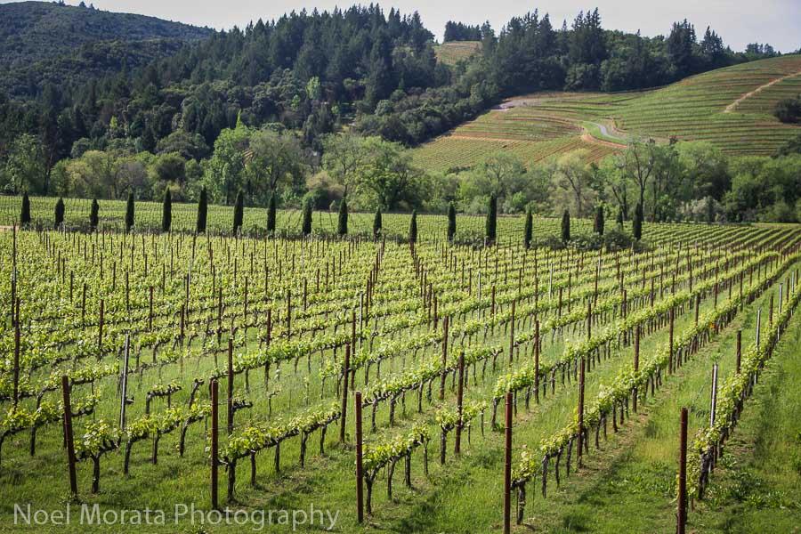 Wine tasting in Dry Creek Valley, Sonoma