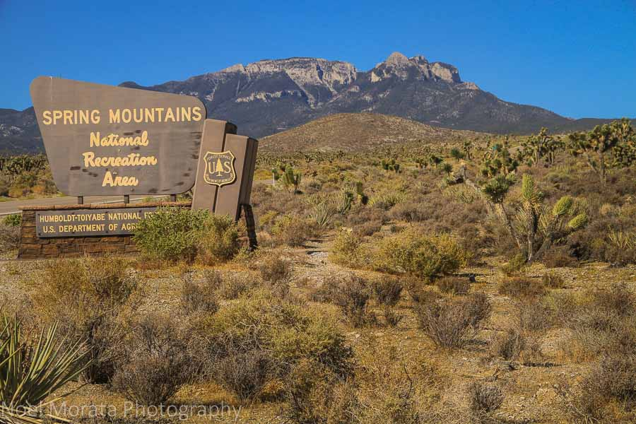 Welcome to Spring Mountain National Forest