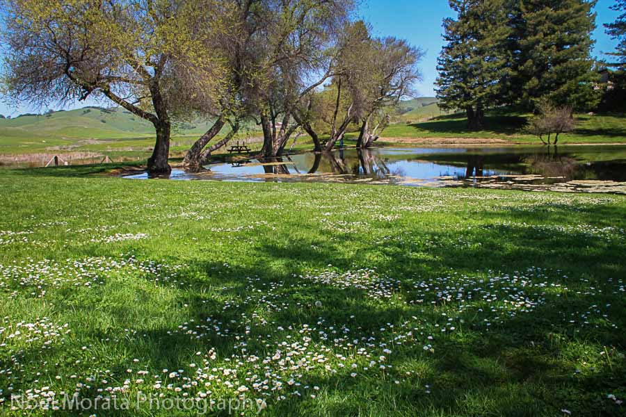 Ponds and picnic area at Marin French Cheese