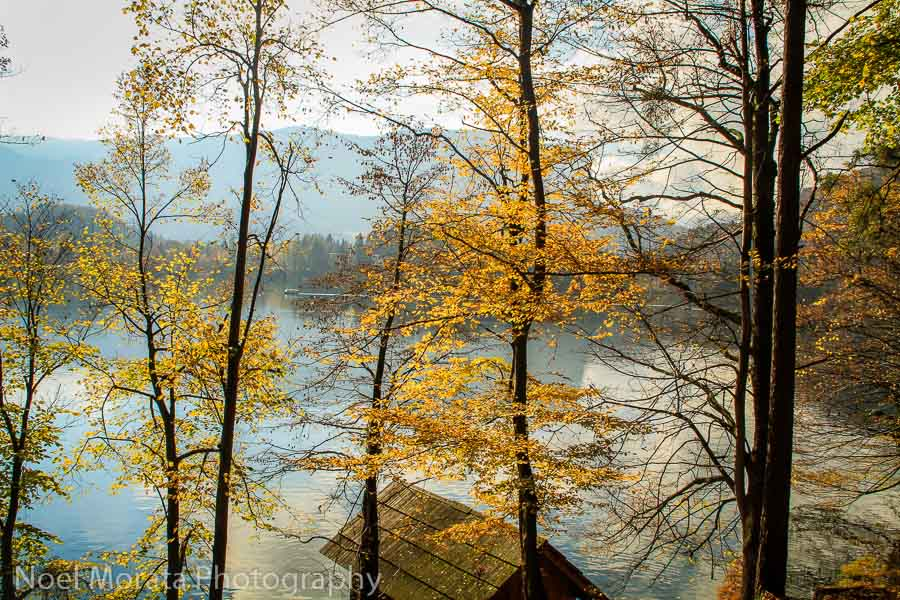 Autumn glory by the shore line at Lake Bled