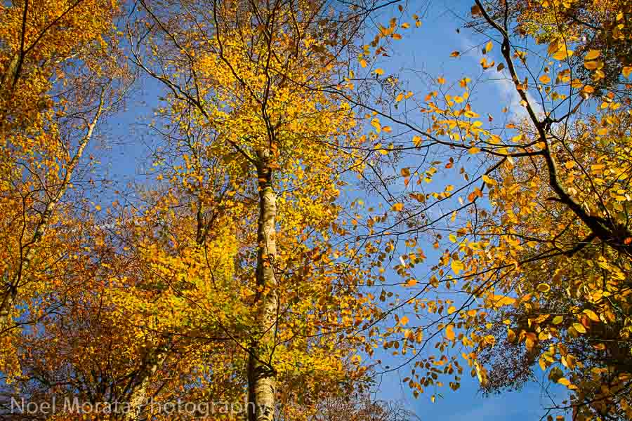 Looking above at fall color and trees - Plitvice National Park