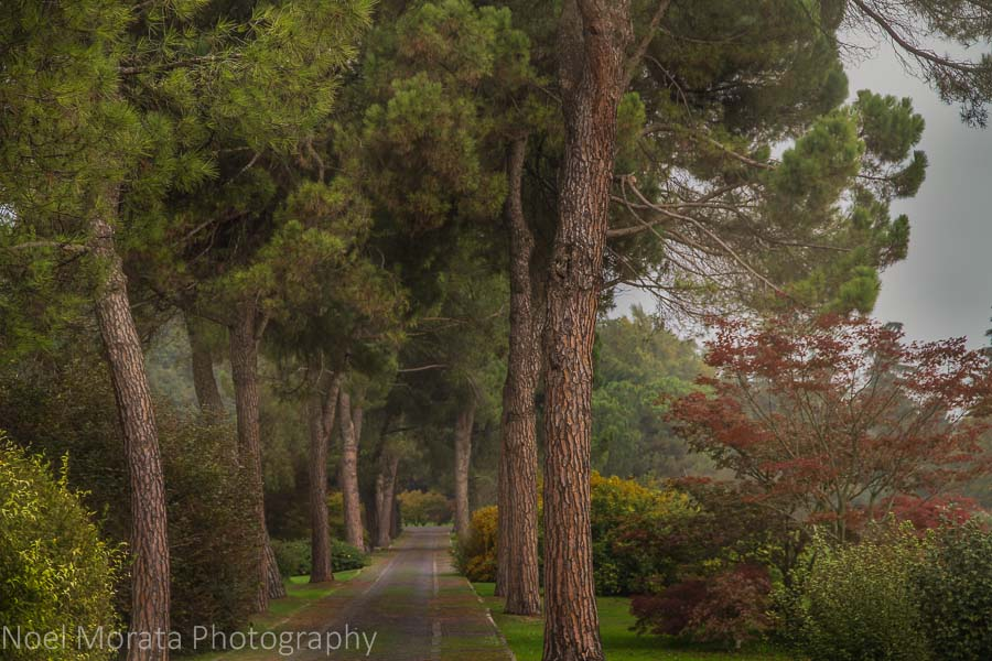A gorgeous tree lined walkway at Parco Giardino Sigurtà