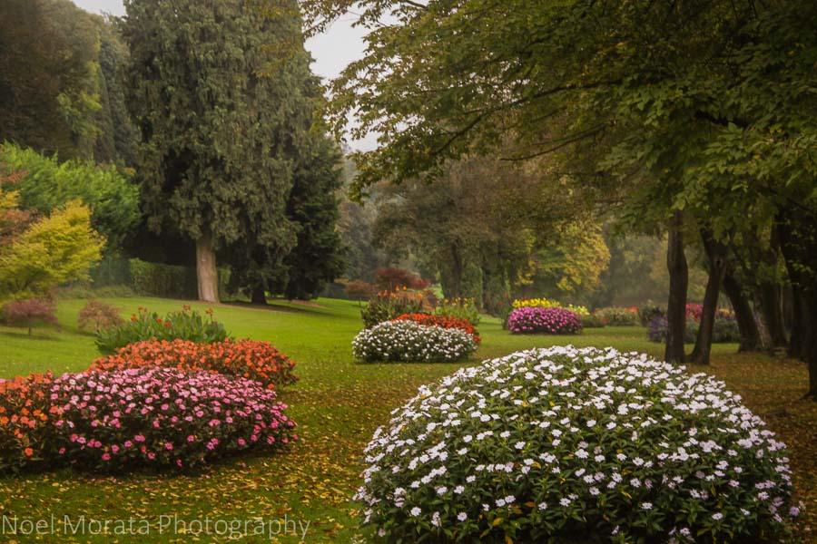 Last colorful winter blooms at Parco Giardino Sigurtà  in Mincio