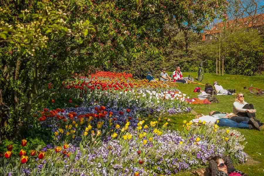 Lounging amid the flower beds at Ørstedparken in central Copenhagen