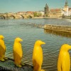 Penguins facing Prague's old town - Prague's public art scene