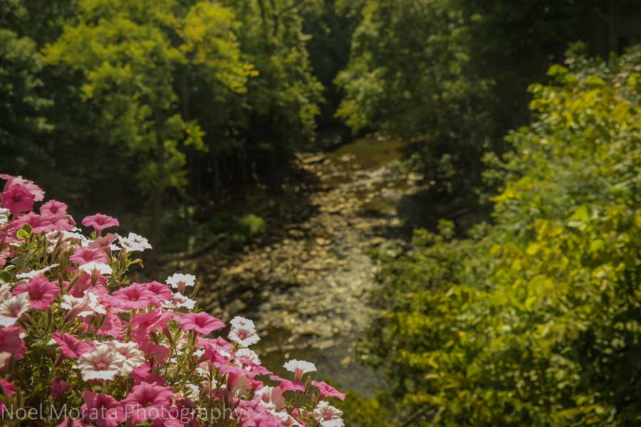 Summer annuals at Chagrin Falls, Ohio