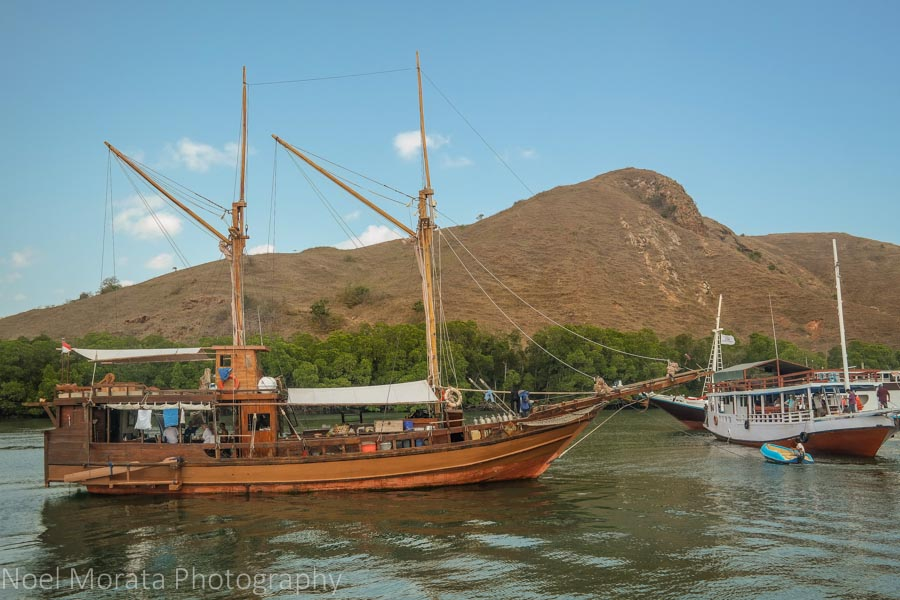 Exploring Rinca Island - Visiting Komodo National Park
