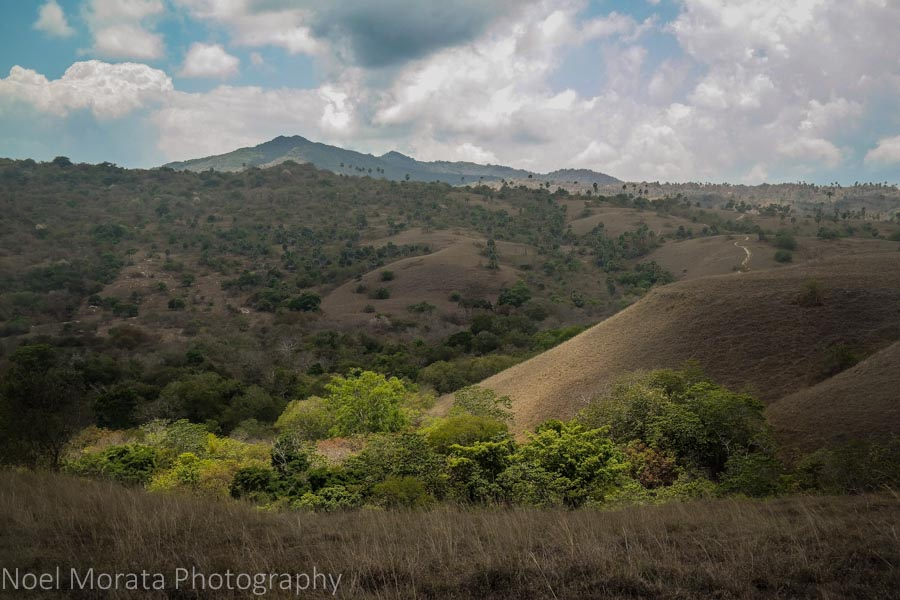 Grassy chaparral areas to the peak - Visiting Komodo National Park