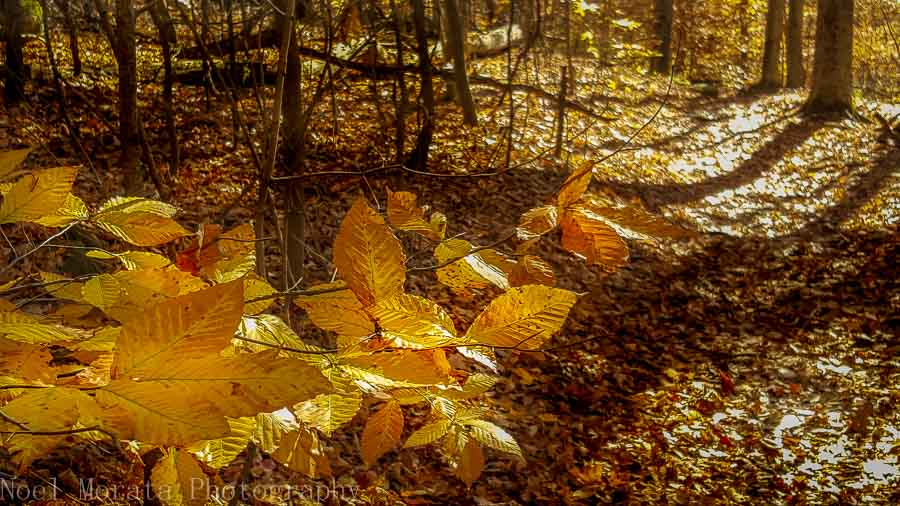 Autumn color at Hinckley Reservation in Ohio