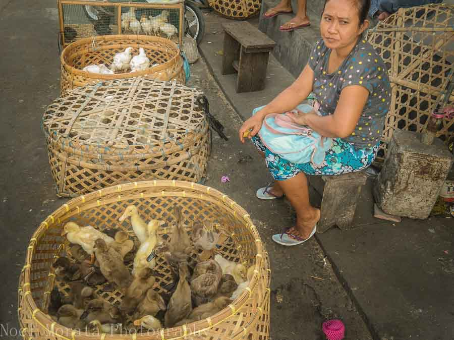 Live ducks for sale with a vendor in Tabanan, Bali - Markets in Bali