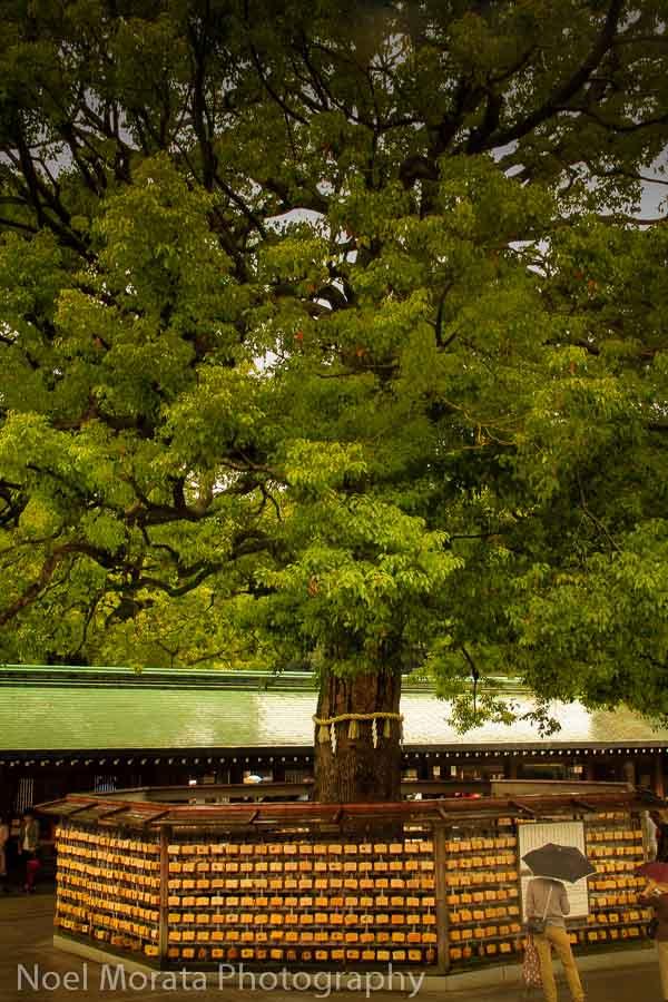 Wishing tree at Meiji Shrine in Yoyogi park, Tokyo