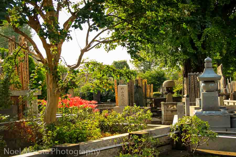Aoyama cemetery - Best places to photograph Tokyo Japan