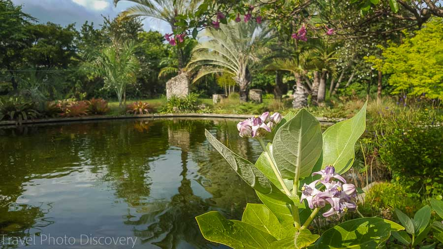Natural pond Visit Miami, Miami Beach Botanical Garden