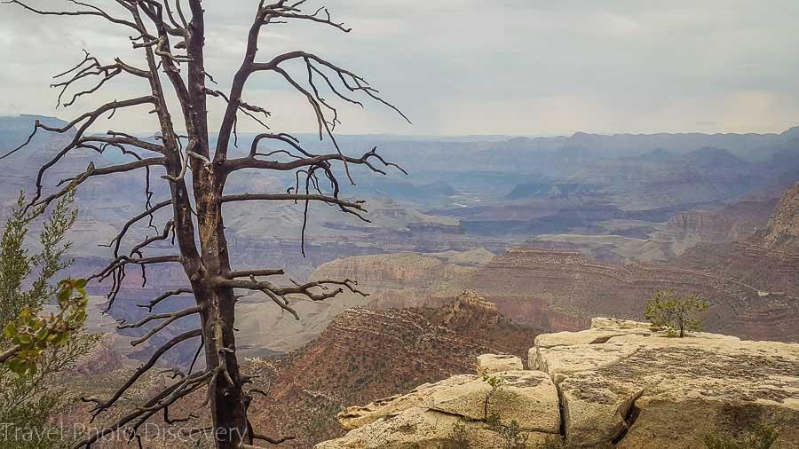 Solitary tree at The Grand Canyon National Park Arizona
